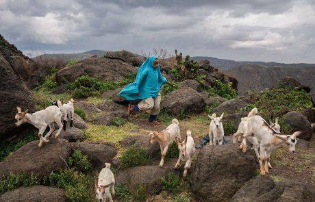 חייה של אשתור גארה , הילדה הרועה מסומליה